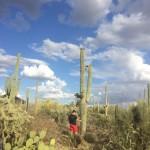 Экскурсия по штату Нью Мексико
