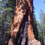 Экскурсия в Парк Йосемити и в Парк Секвой